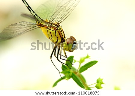 Dragonfly perching on a stick