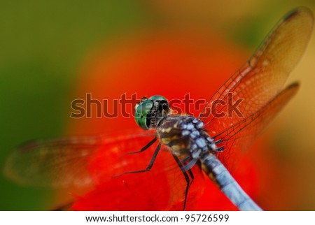 Dragonfly Resting on Red Leave - stock photo