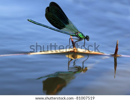 dragonfly sailing in a stick - stock photo