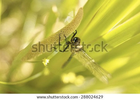 dragonfly sitting on the grass by the lake - stock photo