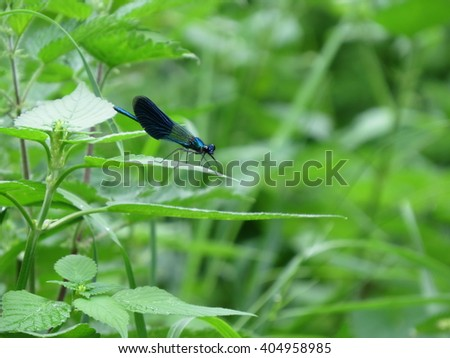 dragonfly with blue wings sitting on a green grass
