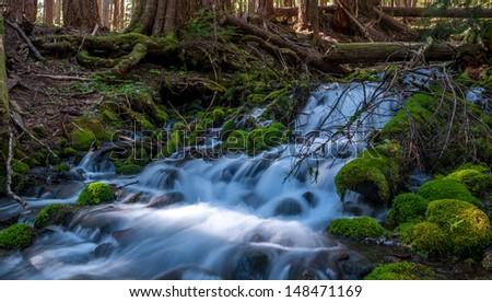 Drainage Falls - Olympic National Park - stock photo