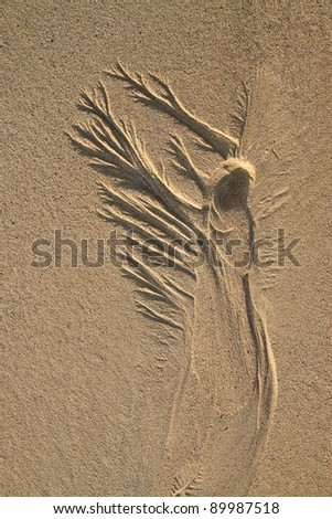 Drainage pattern in beach sand that looks like an angel - stock photo