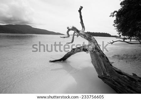 Dramatic black and white dead tree on sand beach of Lipe island, Thailand. - stock photo