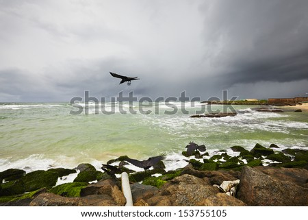 Dramatic clouds of the storm and bird - selective focus - stock photo