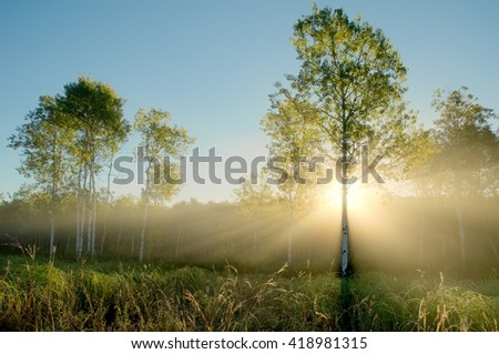 Dramatic Crepuscular Rays in the Foggy Aspen Meadow by the Rice Creek North Regional Trail in Shoreview, Minnesota - stock photo