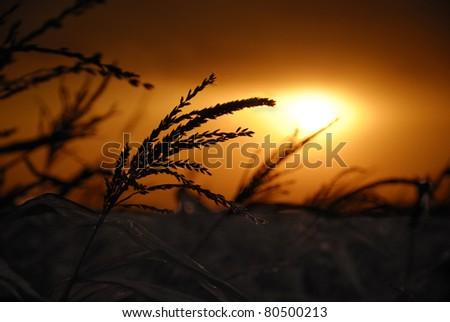 dramatic dark cloudy sunset - stock photo