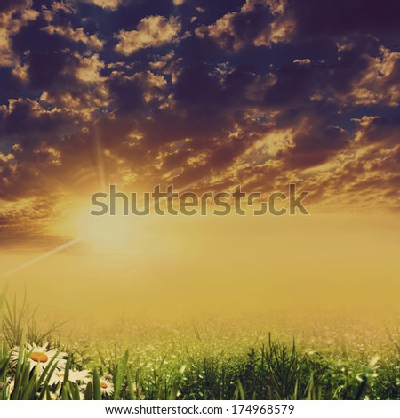 Dramatic landscape with beauty daisy flowers
