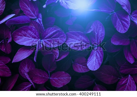 Dramatic lighting over soybean leaves. Conceptual photography: growing plants in space. - stock photo