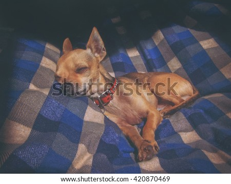 dramatic lighting photo of a puppy sleeping on a plaid blanket with sunshine coming through a window toned with a vintage retro instagram filter effect - stock photo