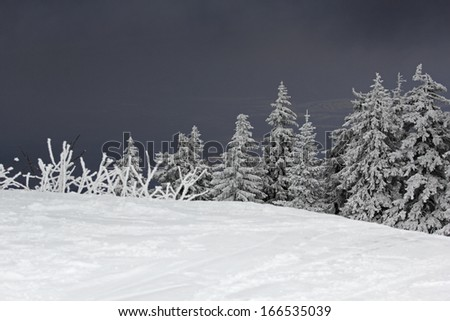 Dramatic mountain winter landscape with fir trees covered with snow and dark sky - stock photo