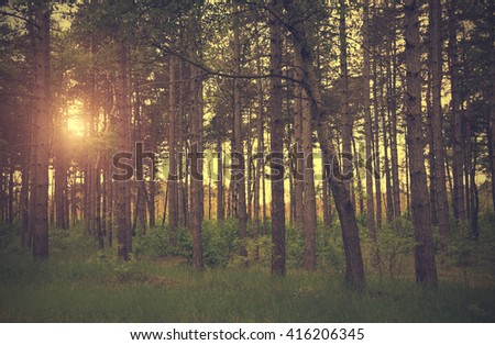 Dramatic photo of a forest scene, detail
