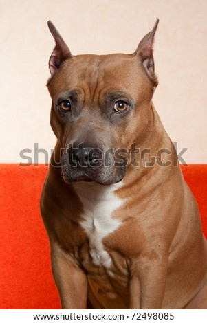 Dramatic portrait of a dog - stock photo