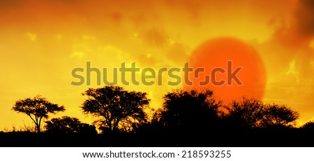 Dramatic savannah sunset and silhouettes of thorn trees and bushes, African landscape - stock photo