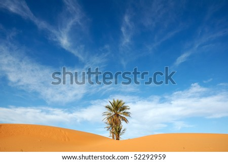 Dramatic sky and lonely palm tree - stock photo