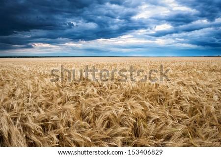 dramatic sky on wheaten field  - stock photo
