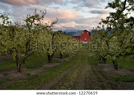 Dramatic Sky over a barn and orchards in Hood River Oregon - stock photo