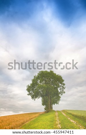 Dramatic sky over golden field and lonely tree