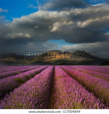 Dramatic sky over landscape of mountain range with lavender field in foreground - stock photo