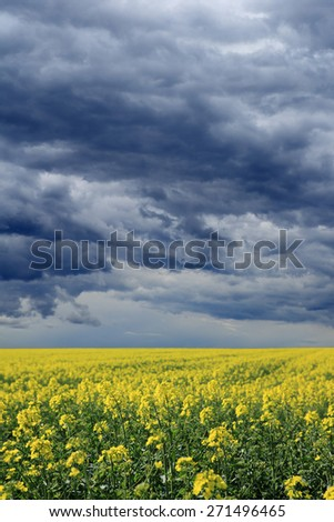dramatic storm clouds over a yellow canola field - stock photo