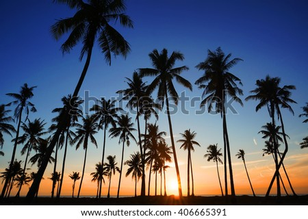 Dramatic stunning morning light sunset and Silhouetted of coconut tree in low light photography - Summer holiday concept - stock photo