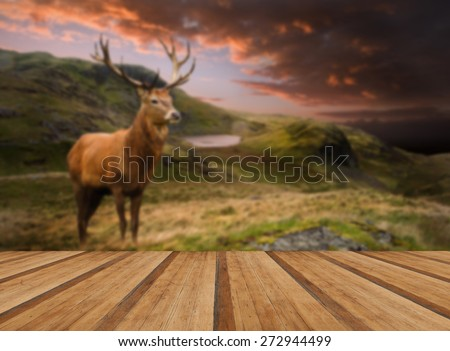 Dramatic sunset mountain landscape and red deer stag with wooden planks floor - stock photo