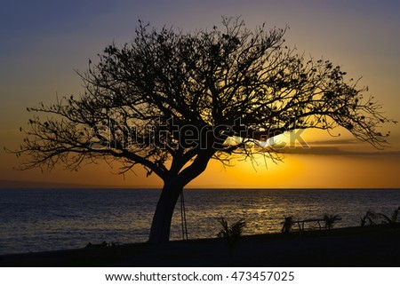 Dramatic sunset on the sea, tree silhouette, Montrouis, Haiti
