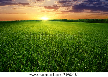 Dramatic sunset over green field. - stock photo
