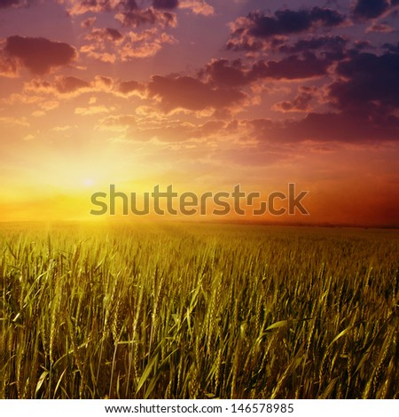 Dramatic sunset over wheat field. - stock photo