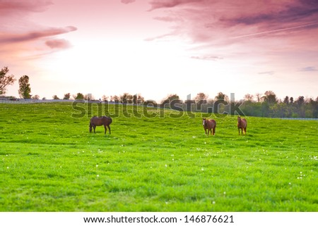 Dramatic sunset sky at country site. Horses at farmland. selective focus - stock photo