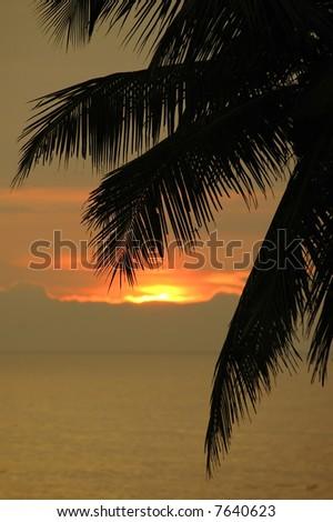 dramatic sunset through palm leaf - stock photo