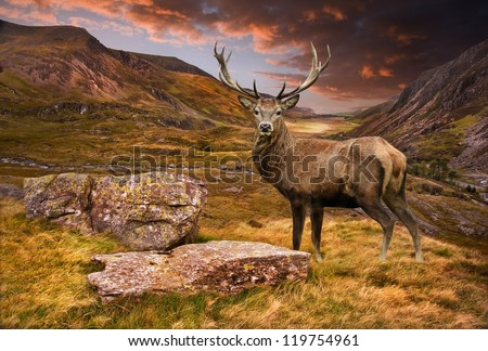 Dramatic sunset with beautiful sky over mountain range giving a strong moody landscape and red deer stag looking strong and proud - stock photo
