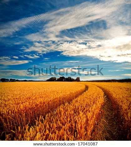 Dramatic view of wheat fields in stormy weather - stock photo