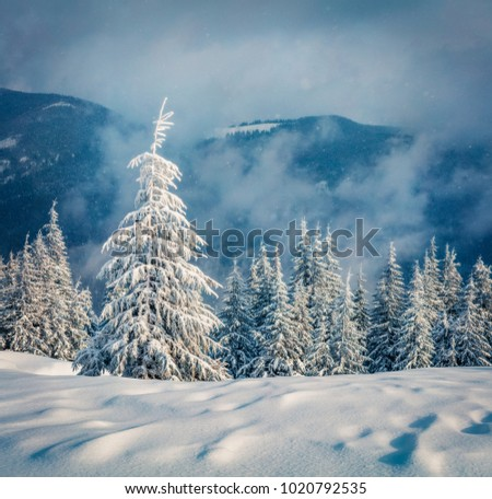 Dramatic winter morning in Carpathian mountains with snow covered fir trees. Snowy outdoor scene, Happy New Year celebration concept. Artistic style post processed photo. Orton Effect.