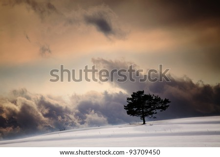 dramatic winter sky over the single tree silhouette