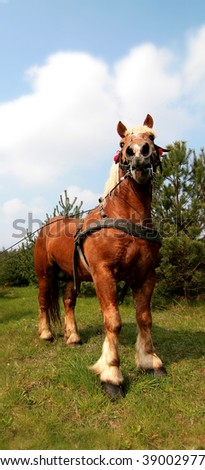 Draught horse - stock photo