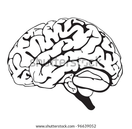 drawing brain closeup on white background