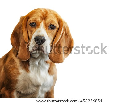 Drawing  Dog Beagle portrait on a white background