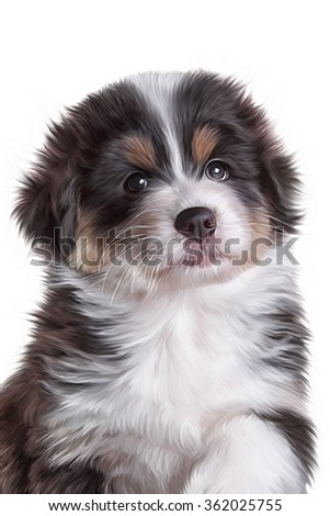 Drawing dog, puppy Australian Shepherd, portrait on a white background