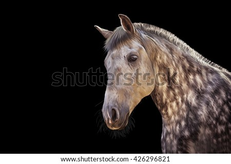 Drawing  Horse portrait on a black background - stock photo