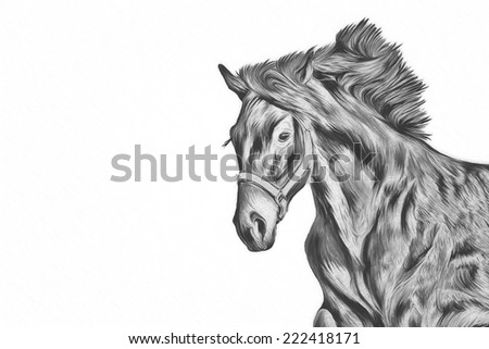 Drawing of a horse, portrait, black and white - stock photo