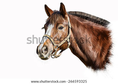 Drawing of a horse, portrait, oil painting on a white background - stock photo