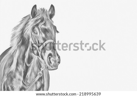 Drawing of a horse, portrait, red horse, black and white drawing - stock photo