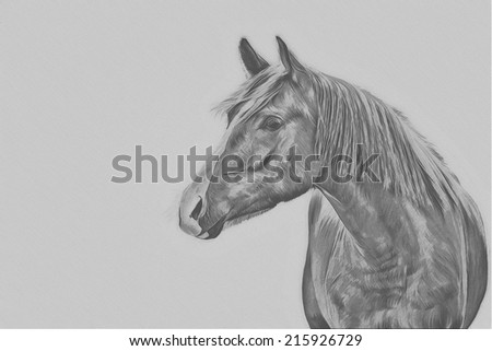 Drawing of a horse, red, portrait, black and white - stock photo