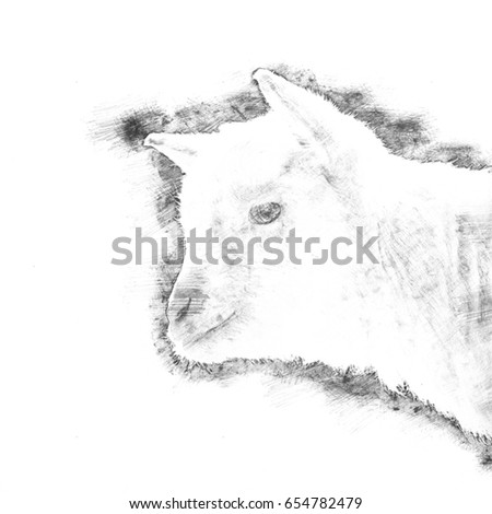 Drawing of a white goat