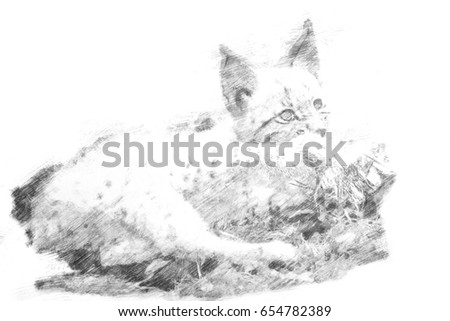 Drawing of a young lynx bobcat playing with wood in the grass