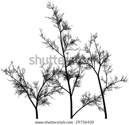 Drawing of black branches on a white background
