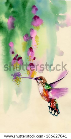 Drawing of colibri bird and flowers - stock photo