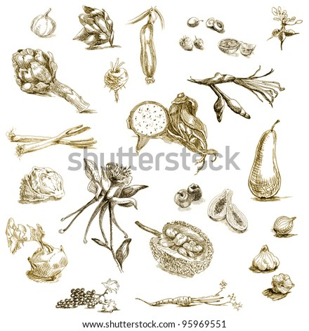 drawing with a sharp tip marker - harvest - a collection of fruits, vegetables, flowers and plants - stock photo