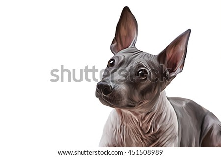 Drawing Xoloitzcuintle - hairless mexican dog breed, portrait on a white background